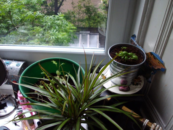 windowsill gardening