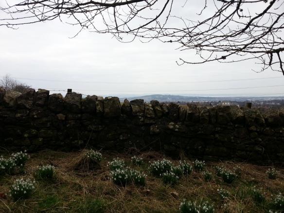 pentlands stone walls